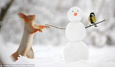 Increasingly curious, the squirrel is joined by a bird as they try to figure out the concept of snowmen