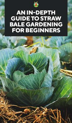 An In-Depth Guide to Straw Bale Gardening for Beginners