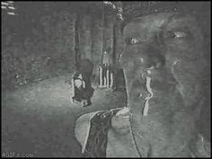 Imagenes de Miedo, Terror, te van a temblar las patas
