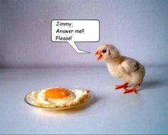Chicken/ humour