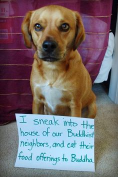 A religious pup...or not.  #dogshame #dogshaming