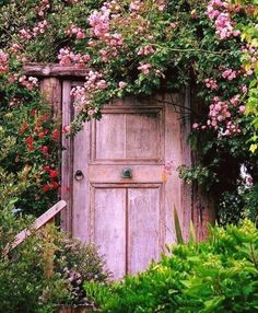 Gorgeous door and flowering vine.