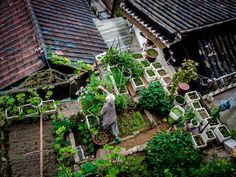 "hnnhmcgrath: ""While technically not on the actual roof of the house, this elderly woman attends to her rather comprehensive garden on the elevated plot next to her traditional home in the Bukchon neighborhood in Seoul. Considering the elevated price of produce this year, such a garden could provide considerable savings."" via Enderle Travelblog"