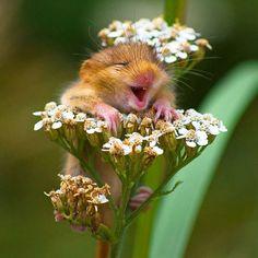 OMG Me encanta flores como tanto al hombre.