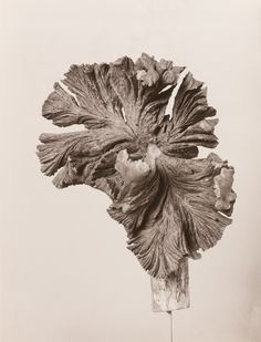 Pflanzen-Objekt