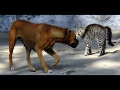 Video Top Funny Cats V/S Dogs Compilation || Funny Cats Compilation