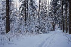 Зимний пейзаж в Подмосковье.(15)