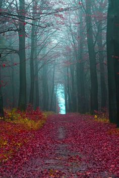Photography.nationalgeographic.com/photography/photo-of-the-day/autumn-forest-germany/  Photography