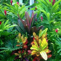 tropical garden inspiration: dwarf red ginger, cordyline (ti plant), crotons - from Fairmont Wailea, Maui Hawaii - Good Gardening Bali Garden, Balinese Garden, Backyard Garden Landscape, Small Backyard Gardens, Hawaii Landscape, Landscape Plans, Garden Bed, Landscape Design, Garden Site