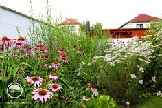 #landscape #architecture #garden #meadow Meadow Garden, Landscape Architecture, Land Scape, Leaves, Patio, Plants, Atelier, Plant, Planets
