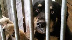 Petition · Alain Rousset : Soutenons le Refuge de l'Angoumois abandonné par la région · Change.org