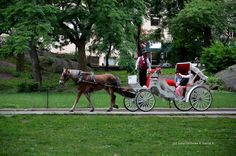 Central Park, Manhattan, New York, USA.