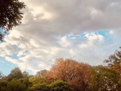 If weather was a visual  #southafrica #spring #centurion #trees #leaves #sky #clouds #blue