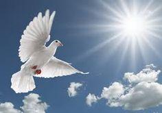 6 Sins against the Holy Spirit Every True Catholic Must Avoid Today Holy Spirit Images, Happy Holi Picture, Holi Pictures, Jesus Prayer, Prayer Verses, Jesus Christ, Bible Verses, Pentecost, Power Of Prayer