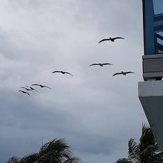 Florida, Bird, Animals, Animales, Animaux, Birds, Animal, Birdwatching, Animais