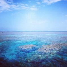 great barrier reef [beautiful day for a swim with the fish] Great Barrier Reef, Beautiful Day, Places To See, Waves, Swimming, Fish, Instagram Posts, Outdoor, Animaux