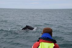 Walbeobachten / Whalewatching