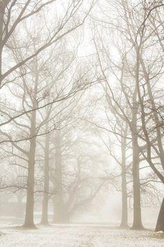Fog at Hagley Museum