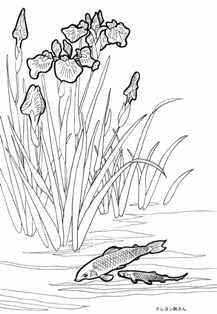 アイリスと鯉の塗り絵の下絵、画像