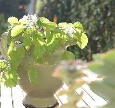 Cuidados de la hortensia - ¡LA GUÍA MÁS COMPLETA! Fruit, Plants, Snoopy, Gardens, Wealth, The World, Hydrangea Landscaping, Container Gardening, Small Garden Patios