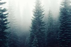 Forest Trees Fog Foggy Free Photo