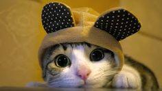 grumpy cat cute cat Love this cat! Baby Animals, Funny Animals, Cute Animals, Animal Jokes, Cute Kittens, Cats And Kittens, Kitty Cats, Cats In Hats, Bad Kitty
