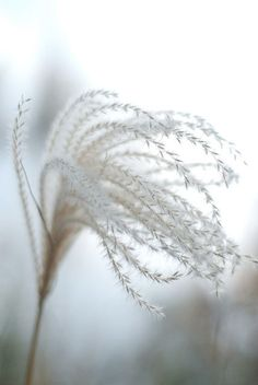 Miscanthus, they catch light, dew, frost and look good most of the winter, dont cut them back in autumn