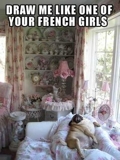 Don't know what's funnier...the pug or the Laura Ashley explosion in the background!