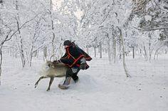 Sami Reindeer Herders | Arctic Wild Adventures | Sami Reindeer herder