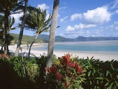 size: Photographic Print: Resort Beach, Hayman Island Poster by Ken Gillham : Travel Vacation Places, Dream Vacations, Vacation Spots, Types Of Photography, Landscape Photography, The Places Youll Go, Places To See, Beach Pictures, Beautiful Landscapes