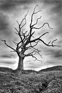 dead tree tattoo idea 5 for right side Tree Photography, Landscape Photography, Tattoo Soeur, Dead Tree Tattoo, Black And White Tree, Orange Aesthetic, Bare Tree, Tree Silhouette, Photo Black