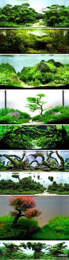 2012年的ADA世界水草造景大赛结束了...