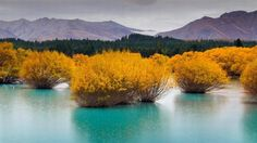 NZ - The lovely colors of autumn have come here