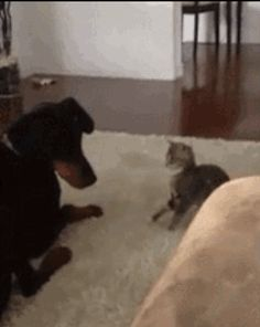 This VERY patient big brother. | 31 Times Dogs Proved They're The Best People