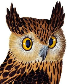 Tawny Fish Owl - Natural History Museum greeting card