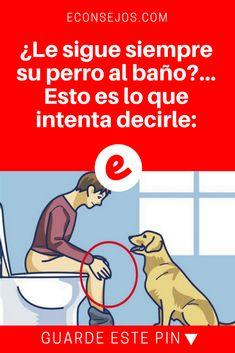 El lenguaje de los perros   ¿Le sigue siempre su perro al baño?... Esto es lo que intenta decirle:   ¿Sabía esto?