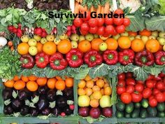 New 11,000 seeds 30 vegetable garden ideas gardening kit Survival Bank Seed Emergency Peppers Cache Pack elevated lot pots Made USA - RopedOnCedar - 4