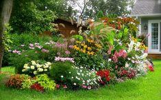 Cómo escoger plantas ornamentales