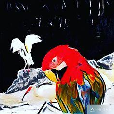 #nature #naturelovers #prisma #painting #keylargo #floridakeys #parrot #colorful #rainbow #fairytale #textures #moment #moments