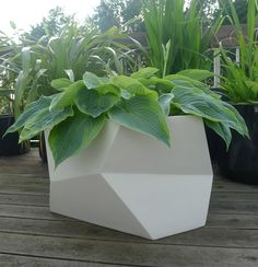 roddy: diamond planter