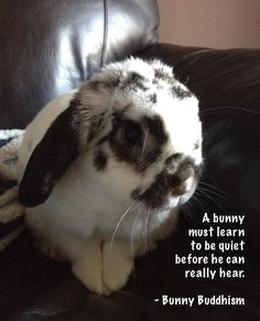 A bunny must learn to be quiet before he can really hear. - Bunny Buddhism
