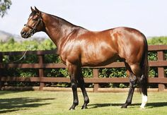 Coolmore Stud's prolific champion sire Galileo (by Sadler's Wells) added two more top-level winners to his tally last weekend, bringing his total of Group/Grade 1 scorers to 58