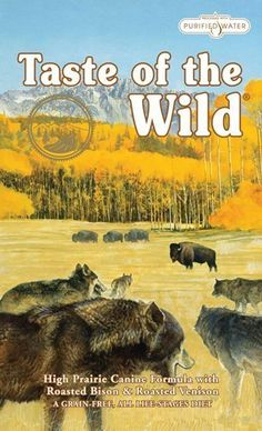 Taste of the Wild Dry Dog Food, Hi Prairie Canine Formula with Roasted Bison Grain-free dog food for all life stages With lean bison and venison meat, roasted for great flavor Cooking Venison, Bison Recipes, Best Dry Dog Food, Best Dog Food Brands, Dog Food Reviews, Grain Free Dog Food, Dog Activities, Pets