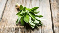 Šalvěj pomáhá při hubnutí i proti zubnímu kazu - Fitsrozumem.cz Fruit, Plants, The Fruit, Plant, Planting, Planets