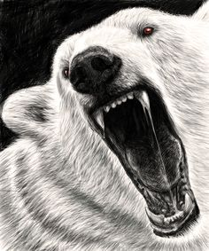 Angry animals on Behance