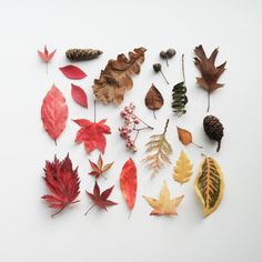 Forest Last Leaf Autumn Colours Tree Fall Forests Wallpapers Hd Autumn Aesthetic, Natural Forms, Autumn Inspiration, Land Art, Fall Halloween, Autumn Leaves, Illustration, Fall Winter, Photoshop