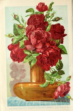 Our new guide to rose culture : 1892