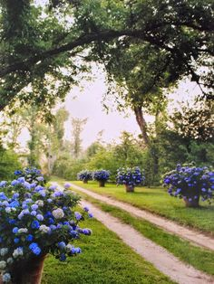 Beautiful Driveway with Blue Flowers