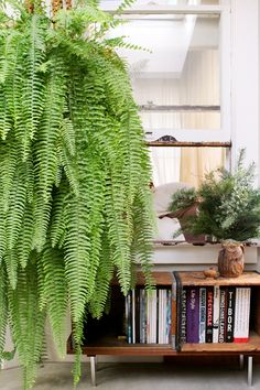 Design Sponge - Gregory Beauchamp: I've found that the secret to ferns is to water them on Sundays and Wednesdays. The bookcase was made from two vintage wooden crates and a cut-up towel rack from Home Depot.  It's surprisingly sturdy, sits next to my desk and holds books on a few of my idols of design.