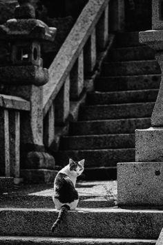 Street cat at some shrine in Aoshima, Miyazaki, Japan